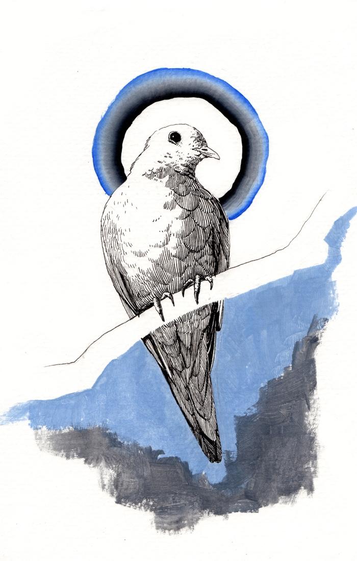 warning dove